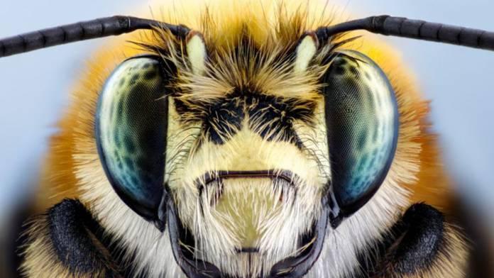 Image of bug shot with the Laowa 100mm f/2.8 2X Ultra-Macro APO lens