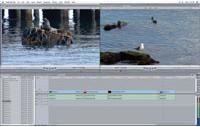 Apple Final Cut Studio 2  Video Editing Software Review