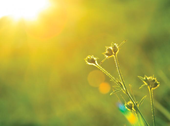Lens flares on backlit scene of winter grass