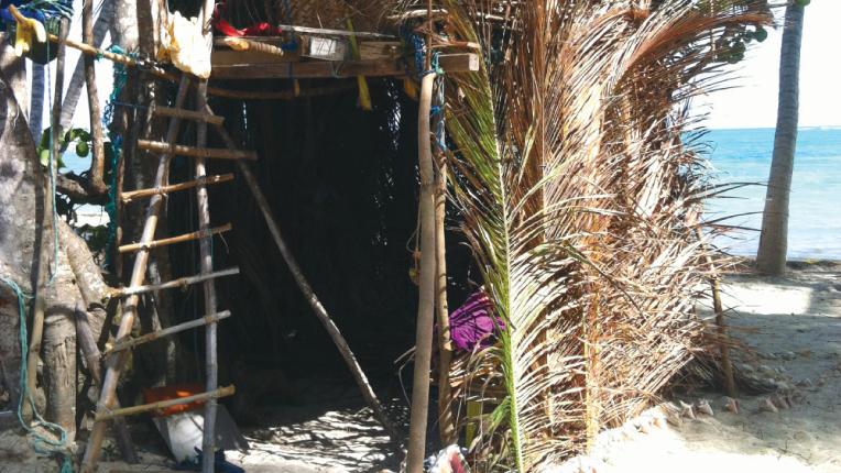 a palm frond tree hut.