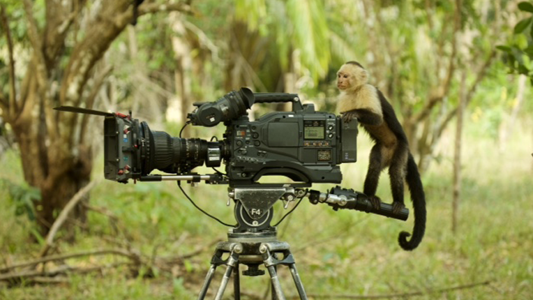 Monkey on a camcorder.
